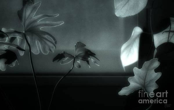 Photograph - Leaves By Moonlight by Jeff Breiman