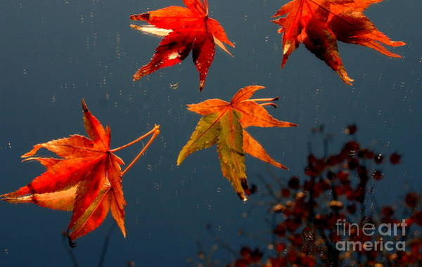 Photograph - Leaves Falling Down by Marie Neder
