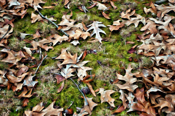 Photograph - Leaves by Gina O'Brien