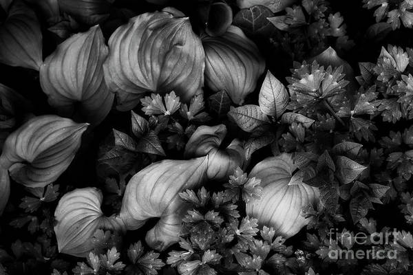 Wall Art - Photograph - Leaves In Spring by Masako Metz