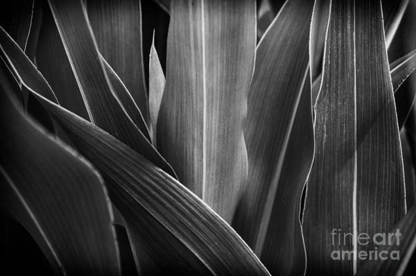 Photograph - Leaves Lines And Tones by Thomas R Fletcher