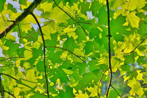 Photograph - Leaves by Lisa Wooten