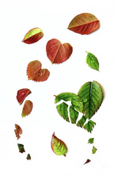 Hart Wall Art - Photograph - Leaves by Masako Metz