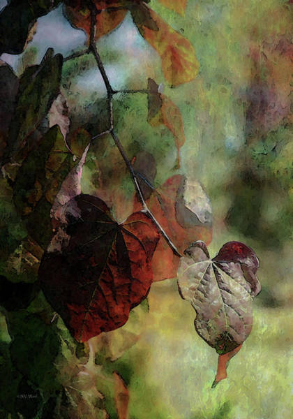 Photograph - Leaves Of Autumn 4442 Idp_2 by Steven Ward