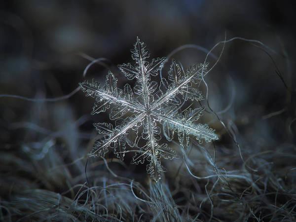Leaves Of Ice Art Print