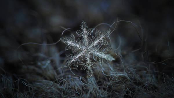 Leaves Of Ice, Panoramic Version Art Print