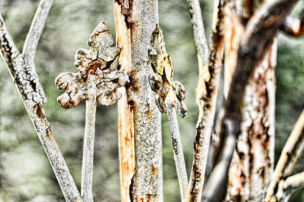 Photograph - Leaves Of Rust by Sharon Popek