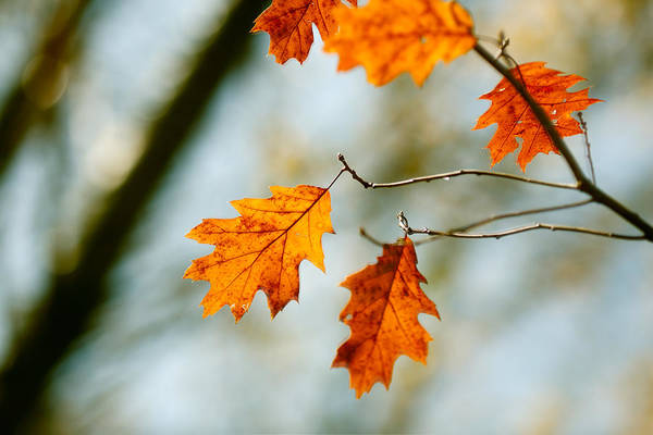 Photograph - Leaves Of Solace by Todd Klassy