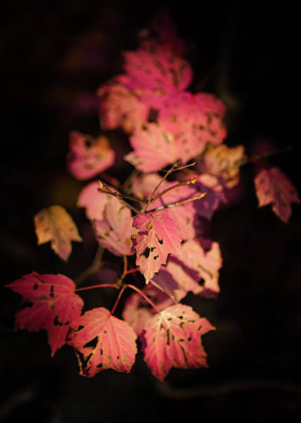 Wall Art - Photograph - Leaves Of Surrender by Karen Wiles