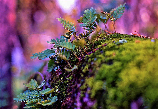 Photograph - Leaves On A Log by Bellesouth Studio
