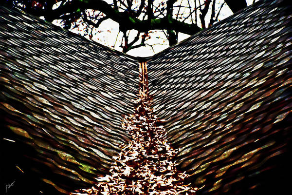 Photograph - Leaves On Rooftop by Gina O'Brien
