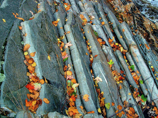 Photograph - Leaves On The Livermore Overthrust by Wayne King