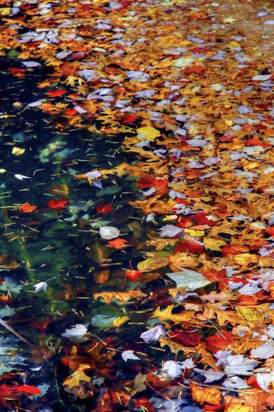 Photograph - Leaves On Water 3 by Sam Davis Johnson