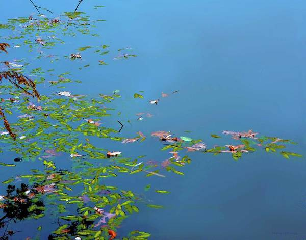 Photograph - Leaves On Water by Coleman Mattingly