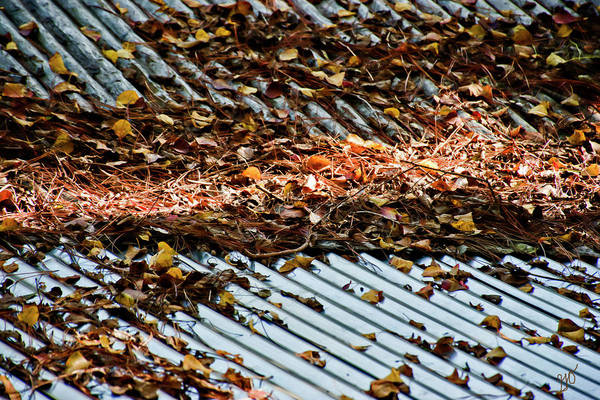 Photograph - Leaves Sticks And Pine Needles On Tin Roof by Gina O'Brien