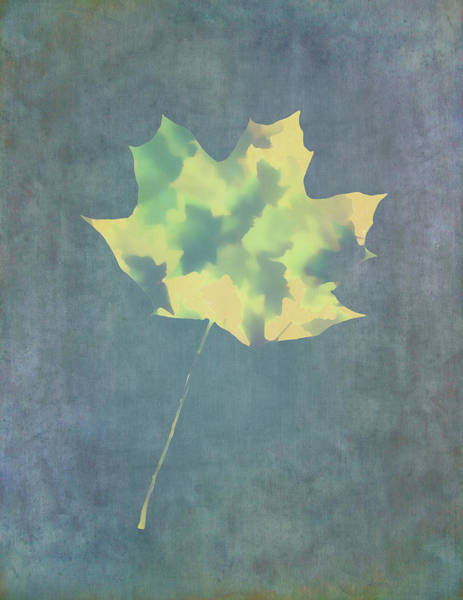 Photograph - Leaves Through Maple Leaf On Texture 3 by Gary Slawsky