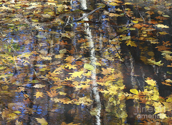 Photograph - Leaves With Birch Reflections by Deborah Benoit