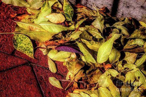 Photograph - Leaving Summer Behind by Jon Burch Photography