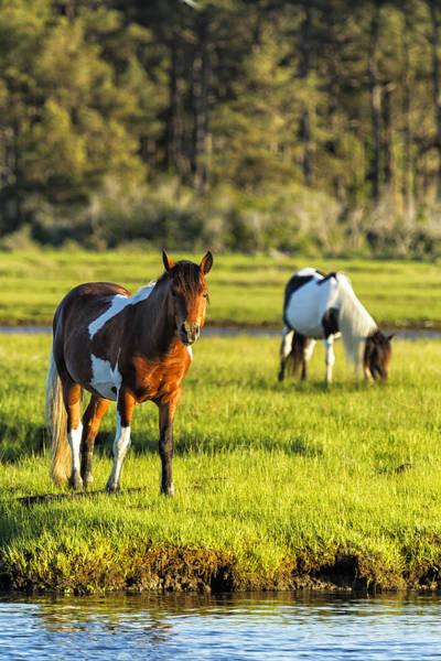 Leaving The Chincoteague Ponies Art Print