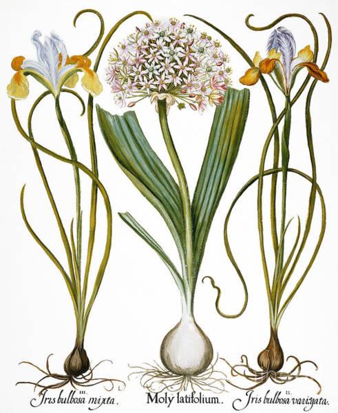 Wall Art - Photograph - Leek And Irises, 1613 by Granger