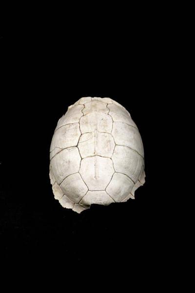 Turtle Photograph - left behind II by Hyuntae Kim