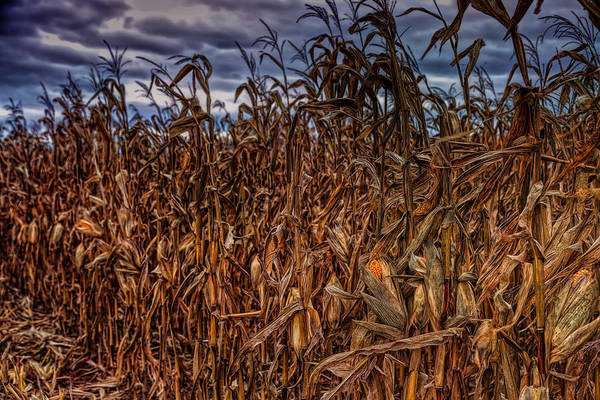Photograph - Left Behind by John M Bailey