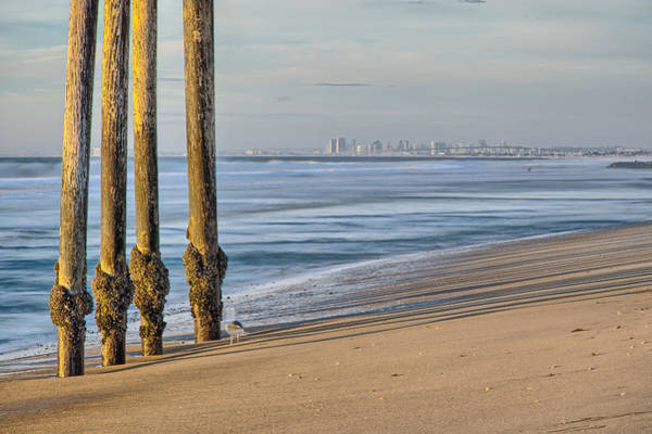 Photograph - Legs With Seagull And San Diego by Peter Dyke