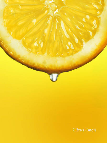 Wall Art - Photograph - Lemon Drop by Mark Rogan
