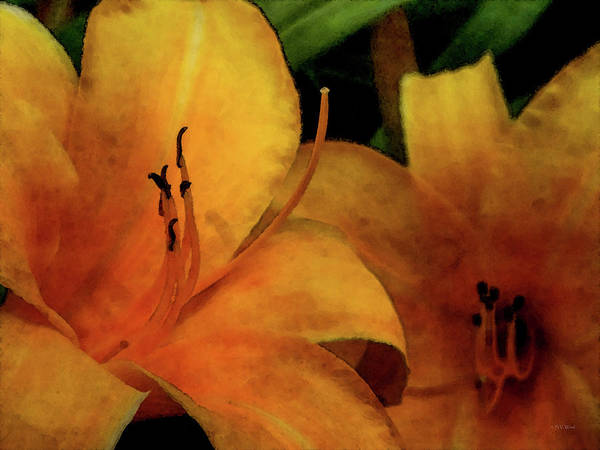Photograph - Lemon Lilies 3700 Idp_2 by Steven Ward