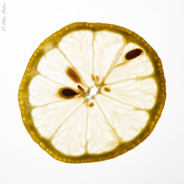 Photograph - Lemon Slice by Alexander Fedin