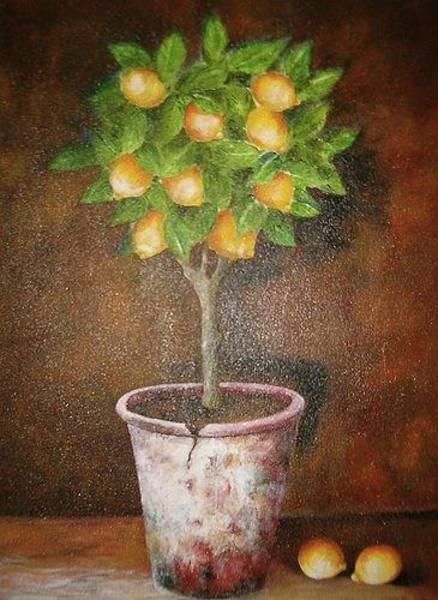 Photograph - Lemon Topiary by Elizabeth Hoare Gregory