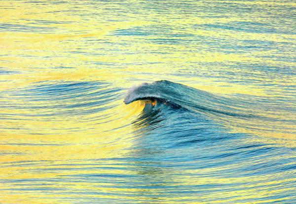 Wall Art - Photograph - Lemon Yellow Curl. by Sean Davey
