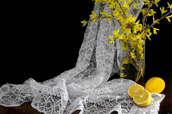 Forsythia Photograph - Lemons'n Lace by Diana Angstadt