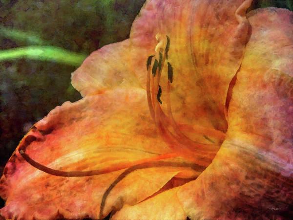 Photograph - Lemony Peach Daylily 3680 Idp_2 by Steven Ward