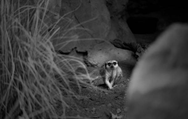 Photograph - Lemur by Maria Reverberi