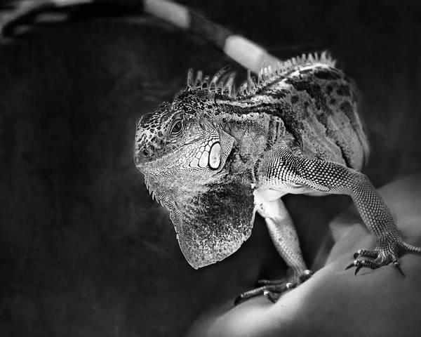 Iguana Photograph - Lenny The Iguana by Susan Capuano
