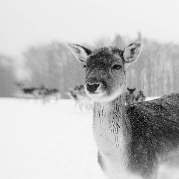 Monochrome Photograph - #lensbaby #composerpro #sweet35 by Mandy Tabatt