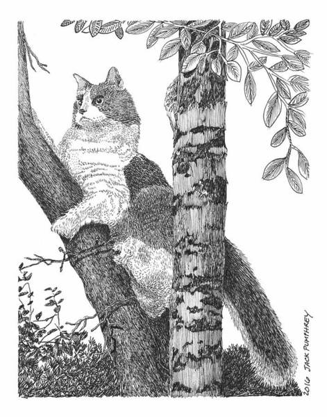 Tabby Drawing - Leo In The Tree by Jack Pumphrey