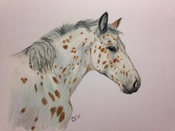 Appaloosa Drawing - Leopard Appaloosa by Alyson Weiss