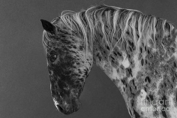 Wall Art - Photograph - Leopard Appaloosa II by Carol Walker