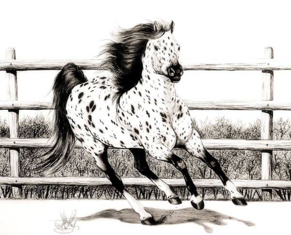 Appaloosa Drawing - Leopard Appaloosa Loping by Cheryl Poland
