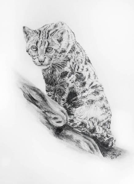 Tabby Drawing - Leopard Cat by Jay Prebble