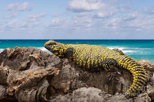 Photograph - Leopard Gecko  by Les Palenik