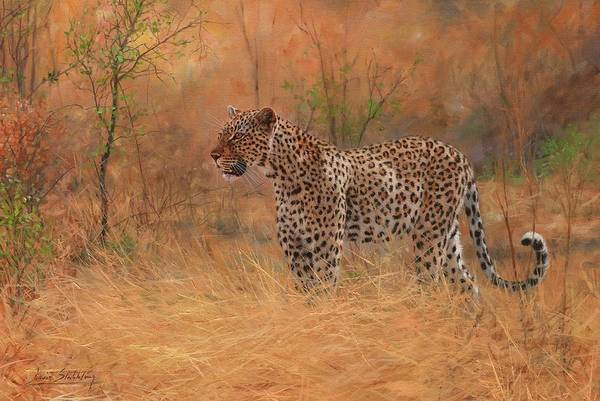 Painting - Leopard In African Bush by David Stribbling