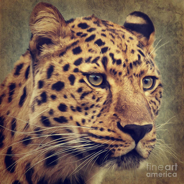 Painting - Leopard Portrait by Angela Doelling AD DESIGN Photo and PhotoArt