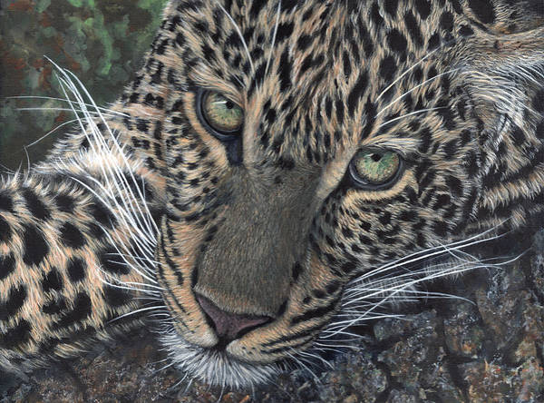 Painting - Leopard Portrait by John Neeve