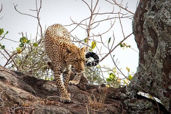 Photograph - Leopard Rock by John  Nickerson