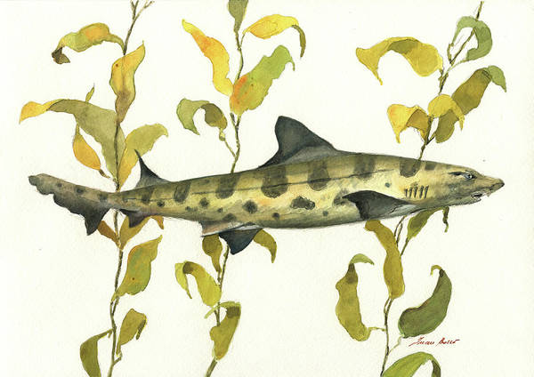 Wall Art - Painting - Leopard Shark by Juan Bosco