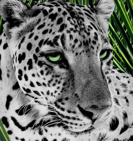 Wall Art - Digital Art - Leopard With Green Eyes by Fred Leavitt