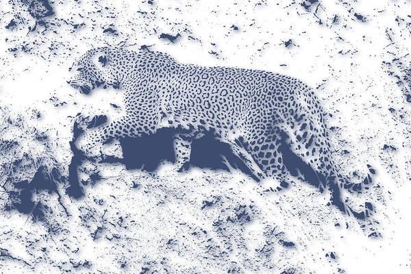 Wall Art - Photograph - Leopard5 by Joe Hamilton